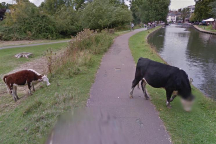 You are currently viewing Google Street View protege identidade de uma… vaca!