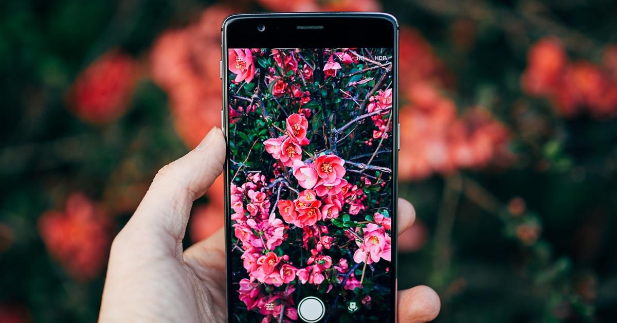Aplicação que diz que flores e bichos estás a ver